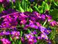 Цветен прашец