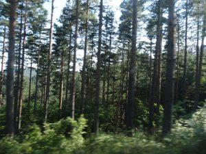 Одит на Сметната палата показа, че националните паркове не се управляват ефективно