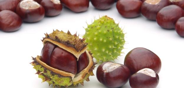 Дивите кестени- богатството на есента